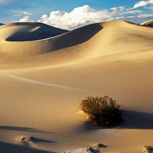 Burian color yellow dunes.jpg