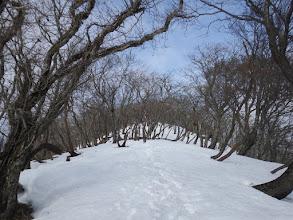鈴北岳へ向う(雪道に)