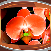 Orchids Live Wallpapers
