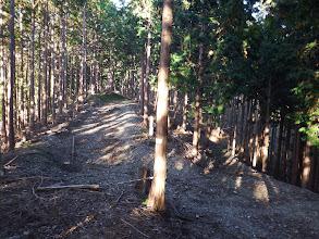 林道に出会う