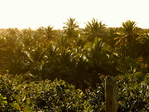 Photo: Sunset at my bungalow - Coconut Groves