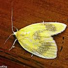 Tufted Moth