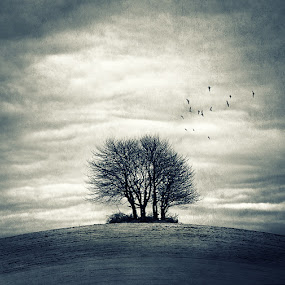 Homecoming.. by Joanna Maciszka - Abstract Fine Art ( clouds, field, tree, early spring, birds )
