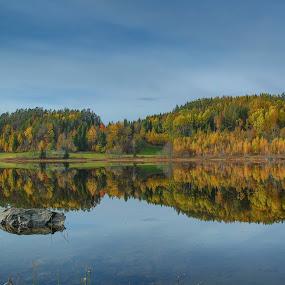by Wiggo Løvik - Landscapes Forests (  )