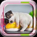 Cute Pets Live Wallpaper icon