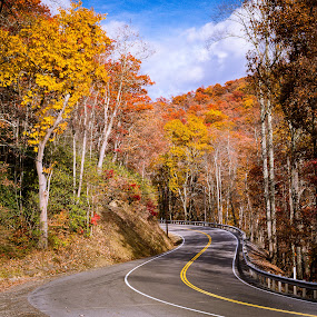 Colorful West Virginia by Michael Sharp - Transportation Roads ( autumn, west virginia, us route 219, fall, road, curves, united states )