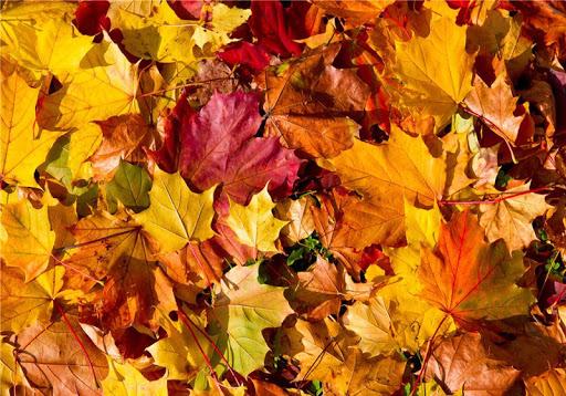 秋天風景拼圖