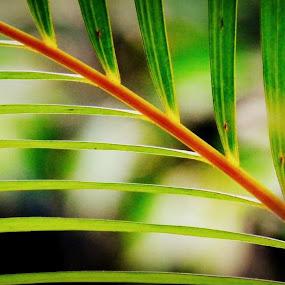 by Jagadeesh Mummigatti - Nature Up Close Leaves & Grasses