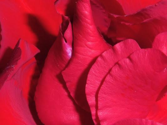 tra i petali di elibetta