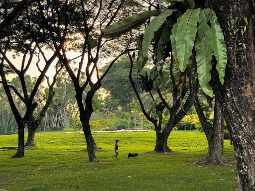 PM Lee Goes Jalan Jalan At Botanic Gardens, Takes Beautiful Nature Photos