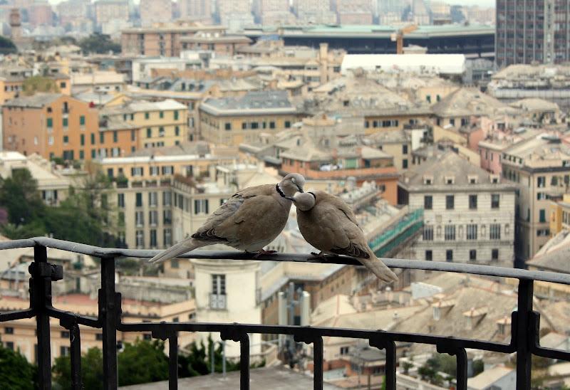 Innocent Kiss di cesca_di.pietro