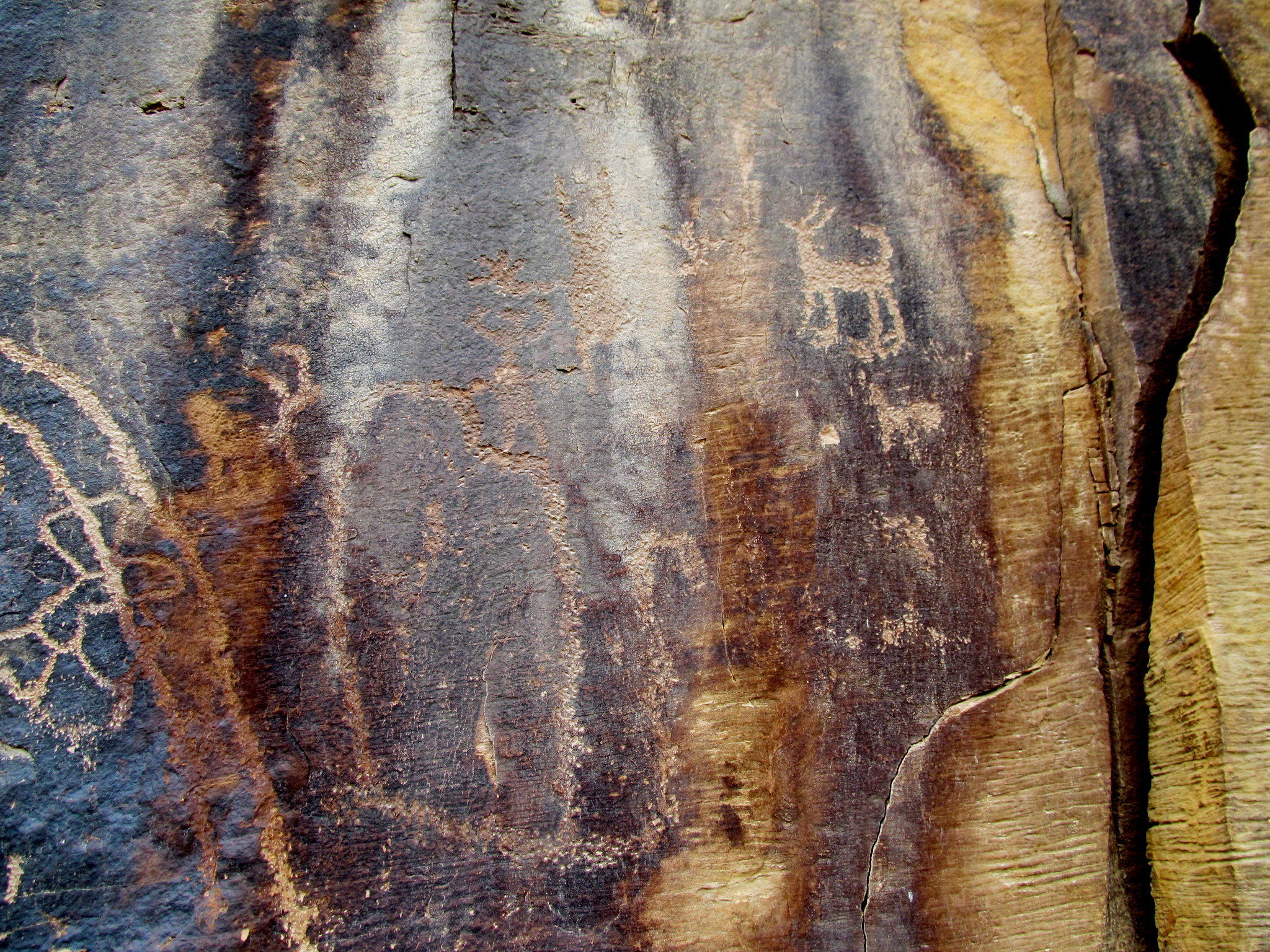 Photo: Petroglyph figures, including a canine