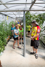 Photo: in the greenhouse