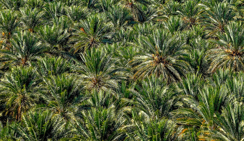 Palm tree di FrancescoPaolo
