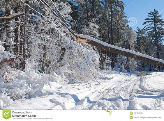 fallen tree on electric lines