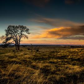Field of Dreams by Michael Mercer - Landscapes Prairies, Meadows & Fields