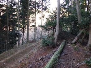 左下に先程の林道か?