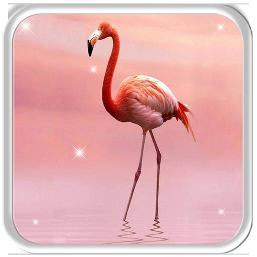 Charming Flamingo Live Wallpaper Apl Di Google Play