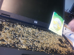 Photo: 7. Add some seeds