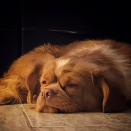 Queeny  by Leyon Albeza - Instagram & Mobile iPhone ( sleeping dog, calmes, pet photography, dog, pet, sleeping )