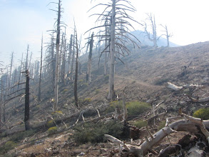 Photo: View back east on PCT amidst the toothpick forest caused by the 2002 Curve Fire and smoky haze from the Williams Fire 2012