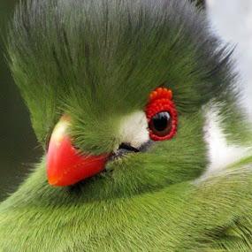 by Welsh Hawk - Animals Birds