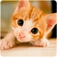 Kitten Wall.. file APK for Gaming PC/PS3/PS4 Smart TV
