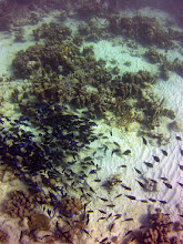 Photo: The ensuing photos show more of the fish, gorgonids and sponges of this reef complex.