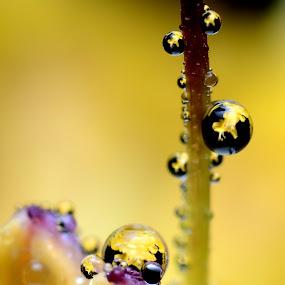 by Mr.Faez FMP - Nature Up Close Flowers - 2011-2013