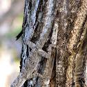 Bark Anole