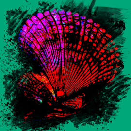 3 D Sea Shell by Dave Walters - Uncategorized All Uncategorized ( macro, nature up close, abstract, colors, digital art )