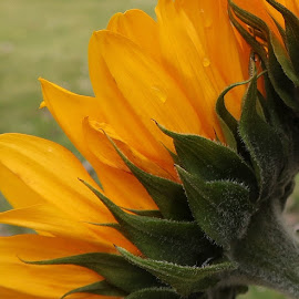 by Millieanne T - Flowers Single Flower