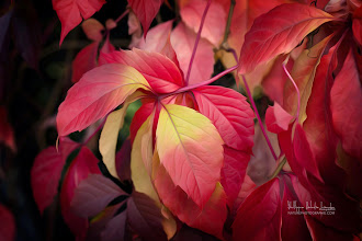 Photo: Fall Feathers