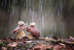 Gocce di pioggia su di noi di Madison
