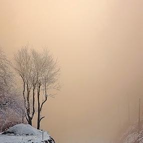 jump into the fog by Gregor Znidarsic - Travel Locations Railway ( winter, railway, fog, snow, rail, train, yellow, morning, light )