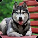 Siberian Husky Pack 2 LWP icon