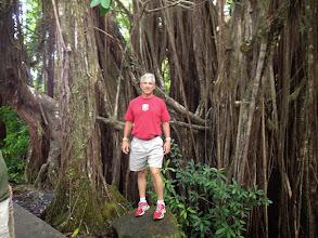 Photo: A giant banyan tree