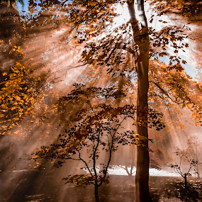Orange Dream  by Brandon Montrone - Landscapes Forests ( fall leaves, sunlight, forest, fall colors, fall, nature, autumn colors, autumn leaves, autumn, rays, landscape,  )