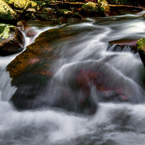 Middle Prong II by Ron Plasencia - Nature Up Close Water ( middle prong, gsmnp, tremont )