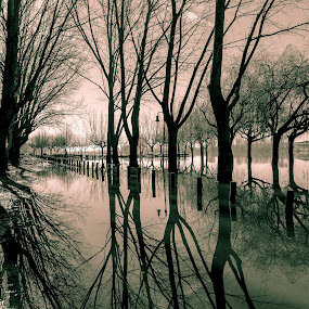 Jogo de sombas by Carlos Costa - Uncategorized All Uncategorized ( water, shades, park, tree, aveiro,  )
