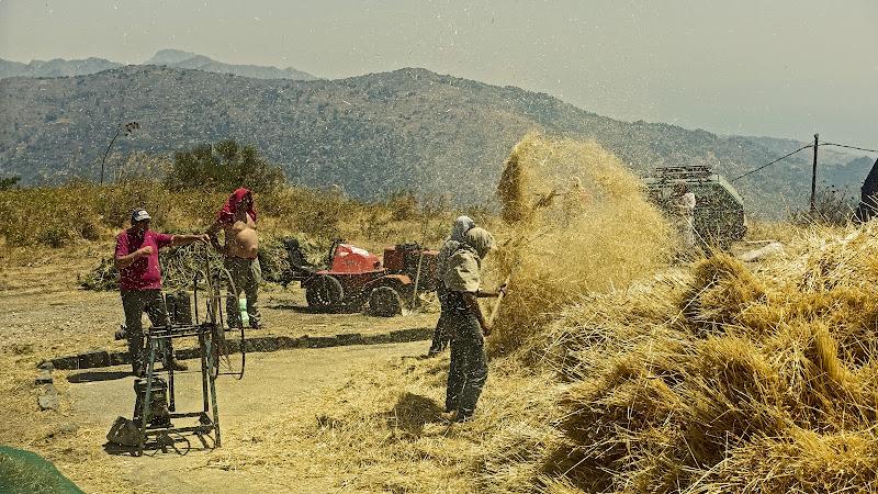 trebbiatura del grano, acquerello di Carl Larsson di lugiube