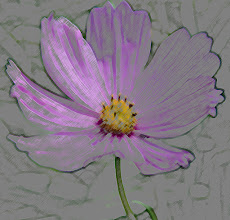 Photo: Colored pencil (5/8/25) - deep lilac cosmos