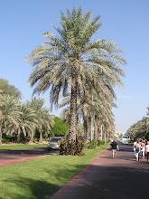 Photo: CB150029 ZEA - Dubaj - palac obecnego Sultana Zayed'a