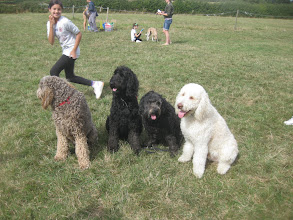 Photo: Tamsin sets up the Labradoodle photo shoot with Brian, Ralph, Tilly and Alan Labradoodle