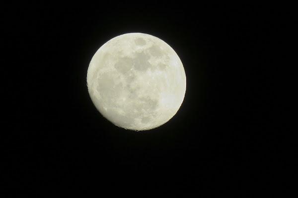 Chiedi alla luna di Erader