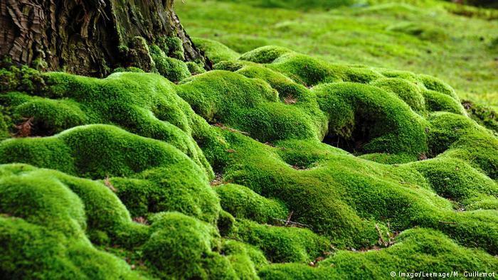 DW eco@africa - Saiho Ji moss garden (Imago/Leemage/M. Guillemot)