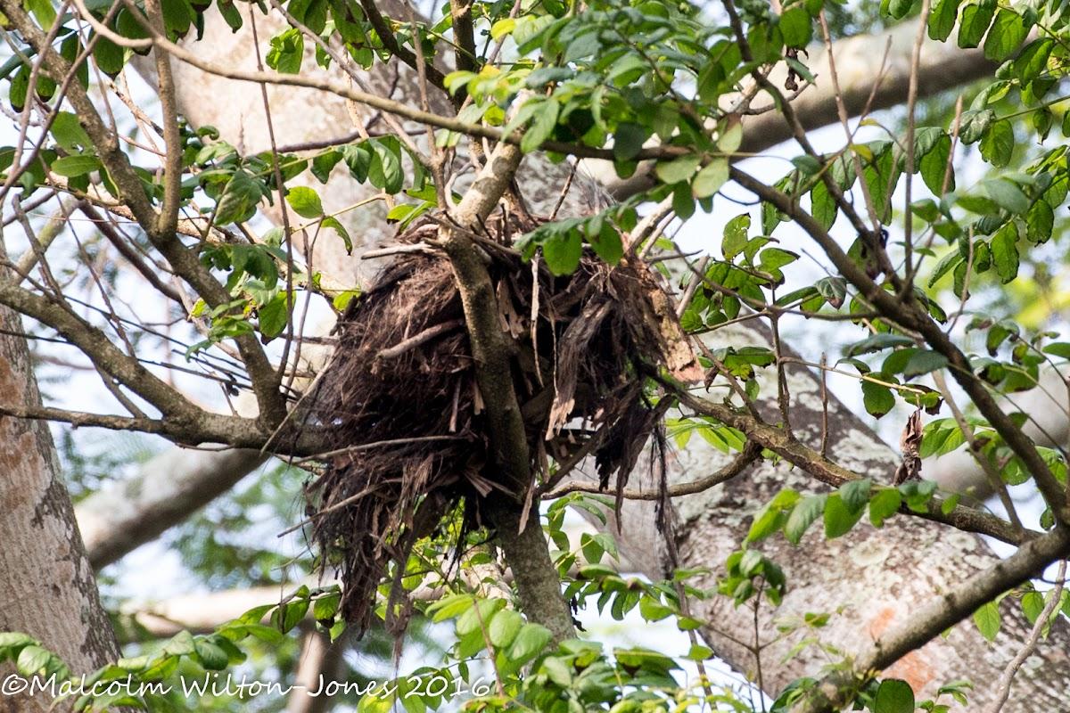 nest or drey?