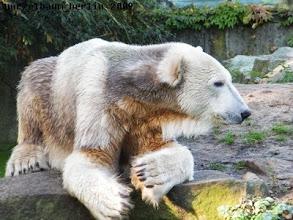 Photo: Knut nimmt erst einmal gemuetlich Platz ;-)