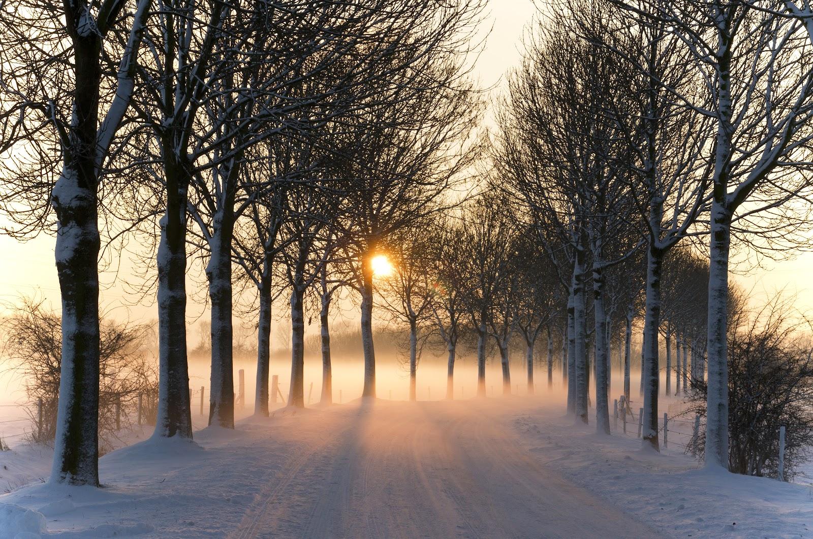 Misty_winter_afternoon_(5277611659).jpg