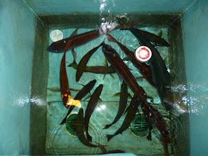 Photo: イノウエさん。19時半の釣果。 ・・・夜中も喰い続けると、どんだけー!釣るのかなー?